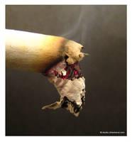 cigar macro 2 by cihanbarut