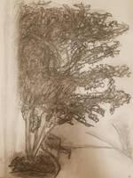 Charcoal Tree by ManuelMaz