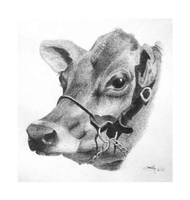 Jersey Cow by 2B2H