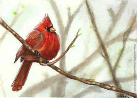 Red Cardinal by Poppysleaf