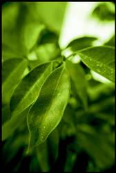 Leaves macro by sengyip