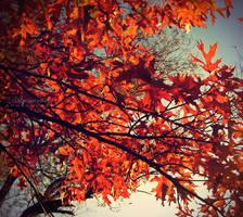 Autumn Sky by Imaginary-Night