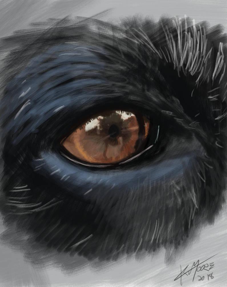 GSP Eye sketch by ckmoore