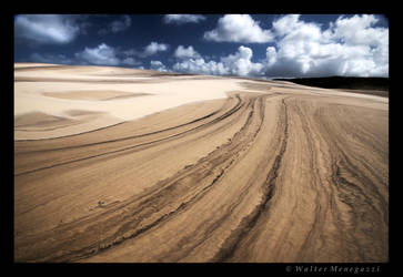 Sand Roots by colpewole
