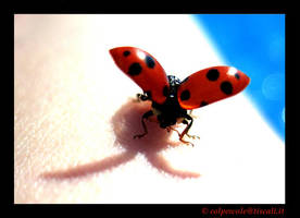 The ladybug takes off by colpewole