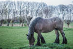 Horse by JJ98Photography
