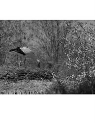 bird by pedramleadguitar