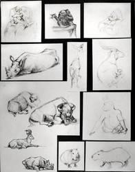 Zoo Drawings2 by Ernimator