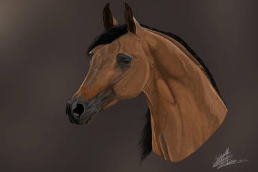 Arabian Horse by Soul-ArtOfMeaning
