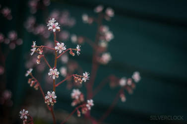 a flower by KocieSamoZuo