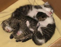 Kitten Pile by xAllyCat