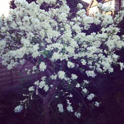A beautiful tree by rocklovingwolf100