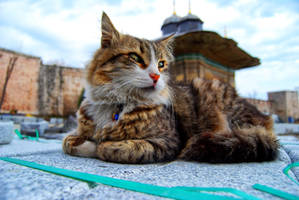 III. Ahmet Fountain cat by ozycan