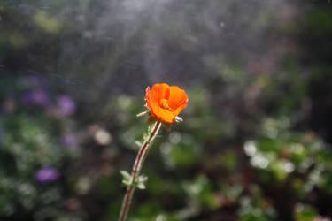 Orange by m-gosia