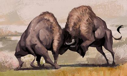 Bison Fighting by AlexAlexandrov