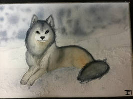 WaterColor Wolf by PonyRushy1098