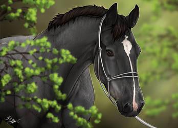 .: | Spring foal | :. Fanart by Pashiino