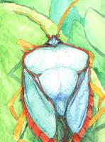 Red-Bordered Stink Bug by AjaxTelamoneis