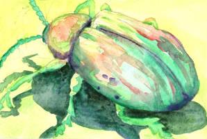 Dogbane Leaf Beetle by AjaxTelamoneis