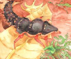 Trilobite Beetle by AjaxTelamoneis
