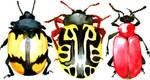 Leaf Beetle Trio by AjaxTelamoneis