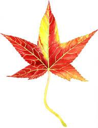 Leaf #29 (Sweetgum, the sixth) by AjaxTelamoneis
