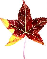 Leaf #30 (Sweetgum, the seventh) by AjaxTelamoneis