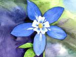 Blue Columbine by AjaxTelamoneis