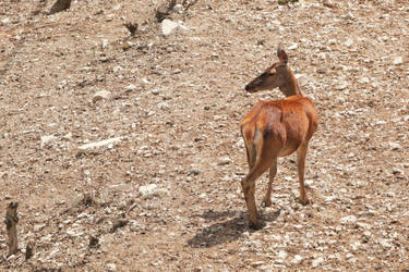 Deer by imargarita