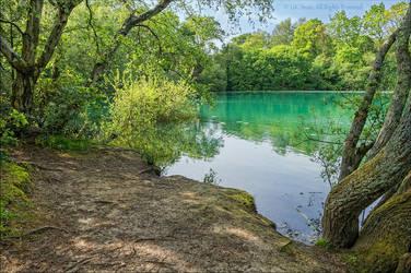 The emerald waters of Creekmoor tarn, Dorset by UK-Shots