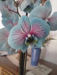 Flower 1 by CrazyMizuki