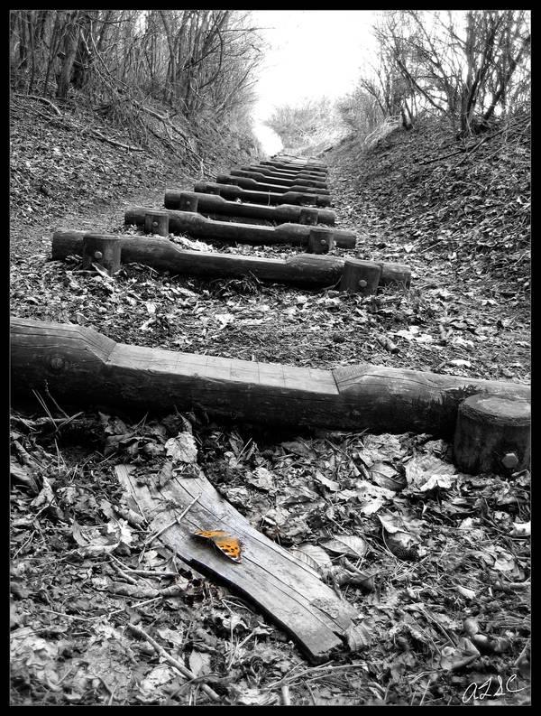 Butterfly Path by AdamTSC