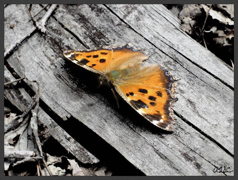 pop butterfly by AdamTSC