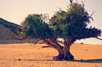 lonely tree by Despina2108