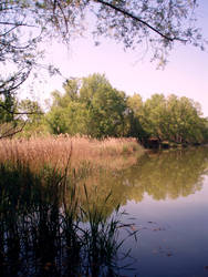The creek by moichita