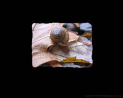 Snail by artislight