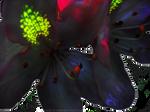 Rhododendron Flower 2 by artislight
