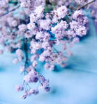 little blue e white flowers by erykucciola-sToCk