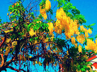 Yellow Flower Tree by Jjanelita