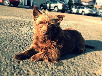 Cute dog by Jjanelita