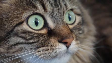 Cat Eyes by ChessJess