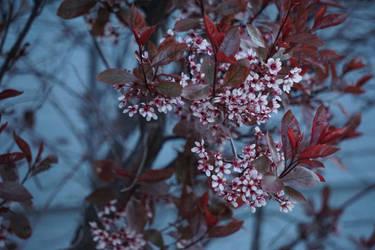 Bloom by ChessJess