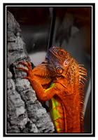 Iguana by Cerebrale-Diarrhoe