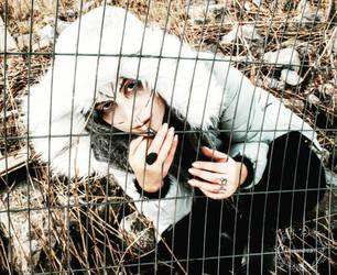 Don't Kill The Animals by Atreyasdream