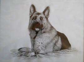 German Shepherd portrait by Elomriel