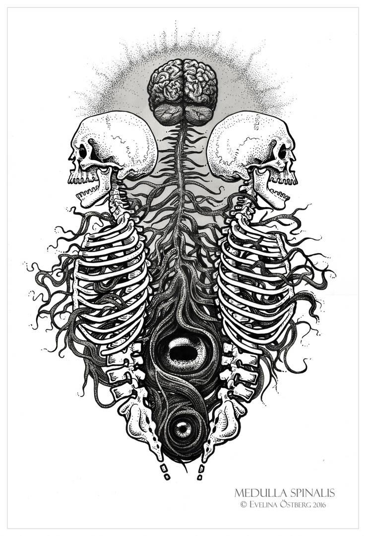 Medulla Spinalis by Elomriel