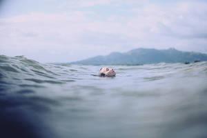 Float by AlexandraSophie