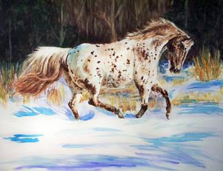 Snow Run by Christa-S-Nelson