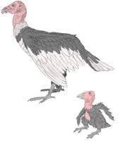 Argentaves by Tomozaurus