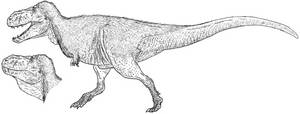 Tyrannosaurus 2014 by Tomozaurus